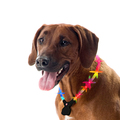 Wolters - Hundehalsband - Nightshift Leuchthalsband multicolor 40-50cm